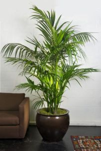Indoor Plants 73