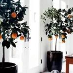 Indoor Plants 86