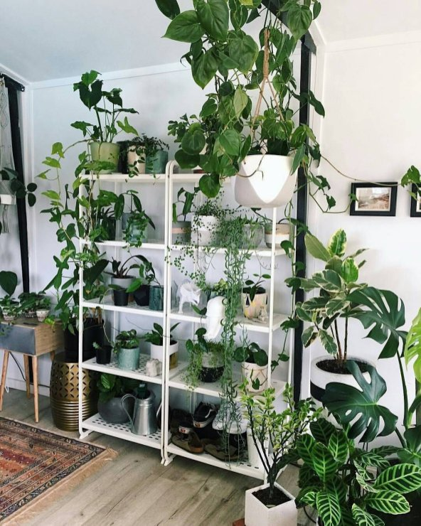Indoor Plants 89