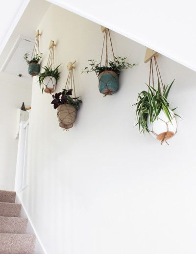 Indoor Plants 90