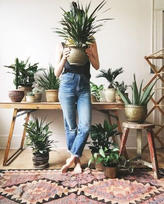 Indoor Plants 93