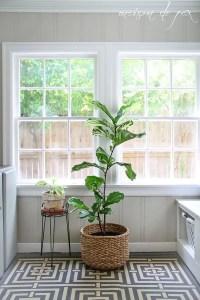 Indoor Plants 97
