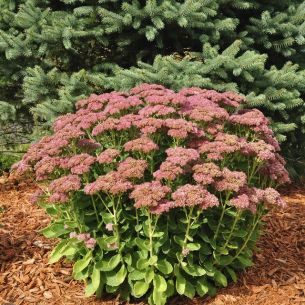 Fall Flowers To Plant 9