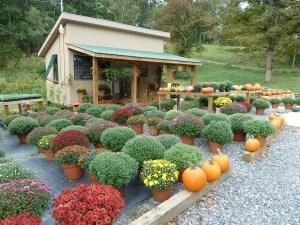 Farm Stand Ideas 17