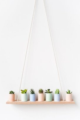 Succulents 13