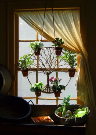 Succulents 7