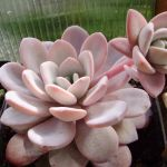Cactus Aesthetic 11