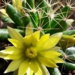 Cactus Aesthetic 15