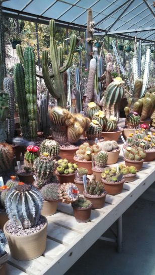 Cactus Aesthetic 16