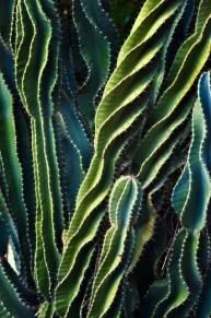 Cactus Aesthetic 22