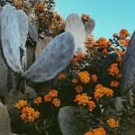 Cactus Aesthetic 5