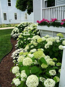 Cottage Garden Front Yard 11