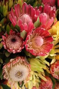 Protea Flower 10