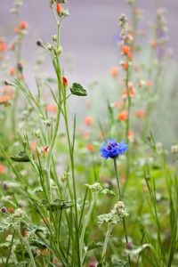 Wildflower Field 10