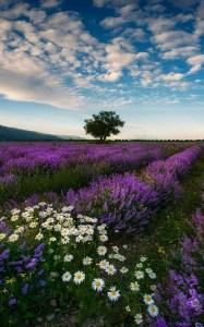 Wildflower Field 15