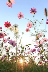 Wildflower Field 17