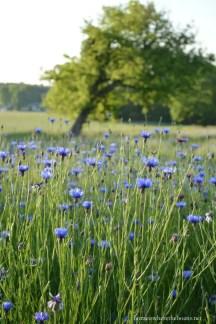 Wildflower Field 20