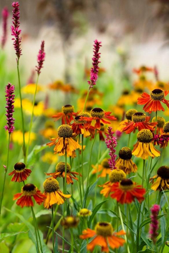 Wildflower Field 23