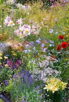 Wildflower Field 25