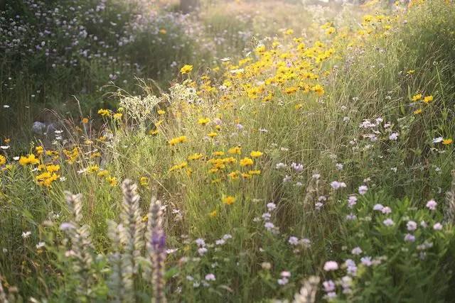 Wildflower Field 29