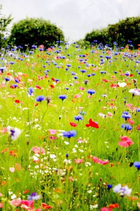 Wildflower Field 7