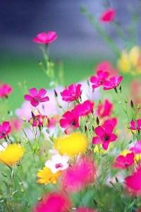 Wildflower Field 8