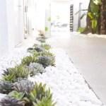 Cactus Landscaping 1