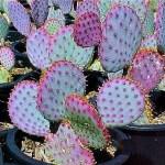 Cactus Landscaping 12