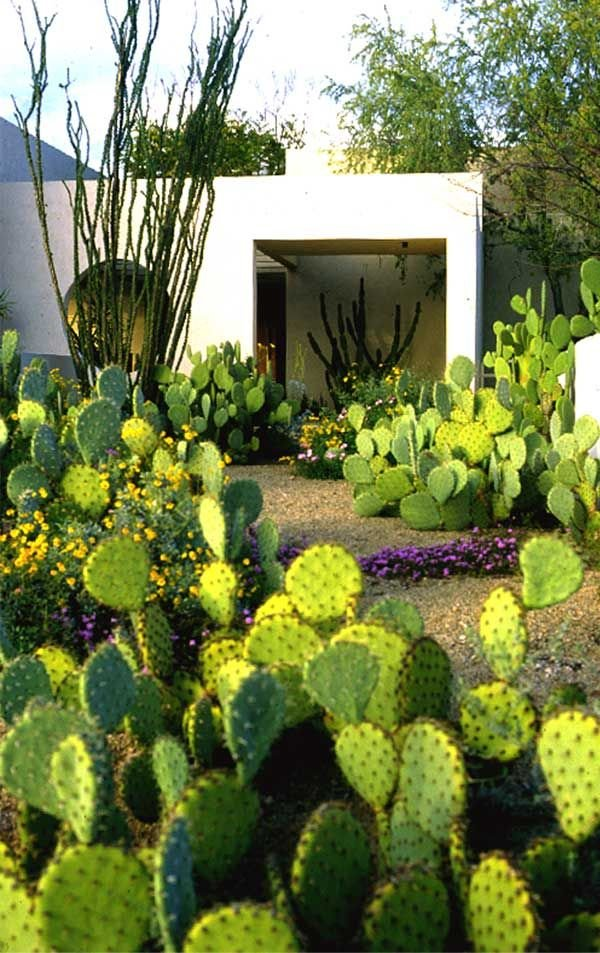 Cactus Landscaping 14