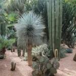 Cactus Landscaping 19