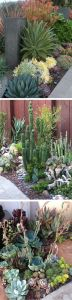 Cactus Landscaping 7