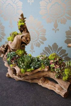 Succulent Design 11