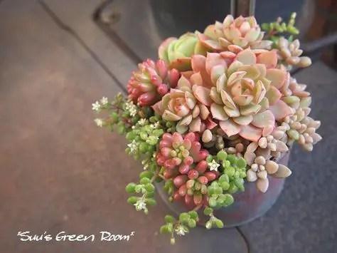 Succulent Design 29