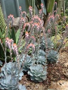 Succulent Design 30