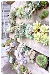 Succulent Design 49