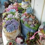 Succulent Design 50