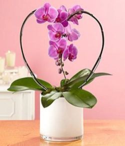 Valentines Day Flowers 21