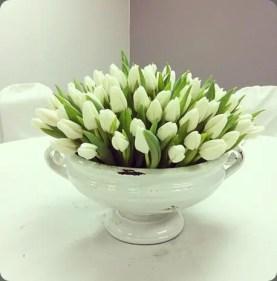 White Tulips 11