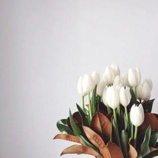 White Tulips 9