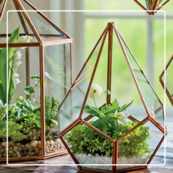3 Terrariums & Plants Result