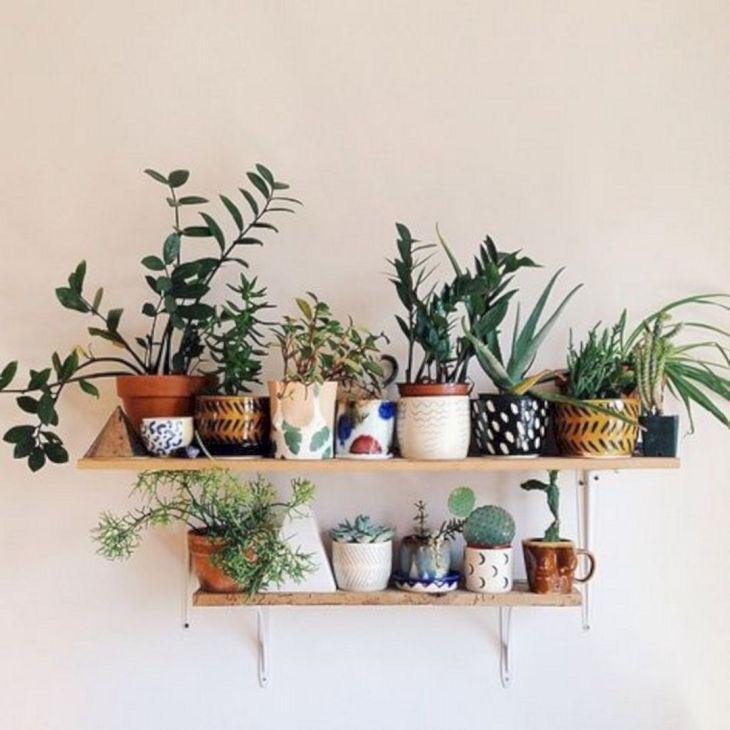 Best Ornamental Plants Ideas