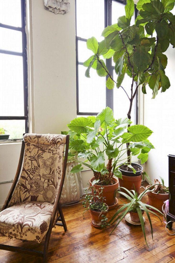 Best Ornamental Plants Design