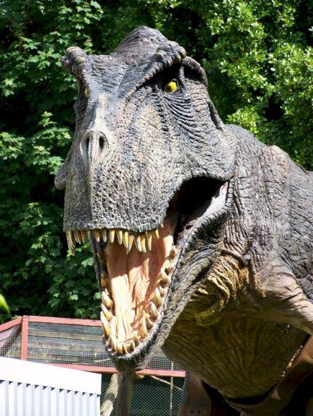 Combe Martin Dinosaur Park And Wildlife 44