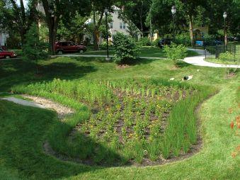 Garden Rain Native Plants