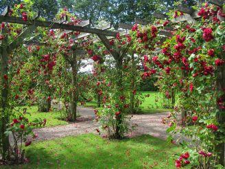 Beautiful Garden Roses