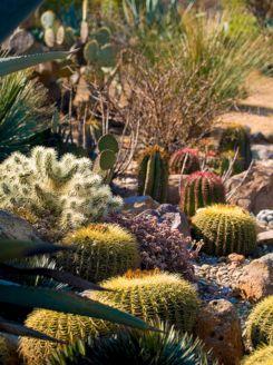 Cactus Garden Designs