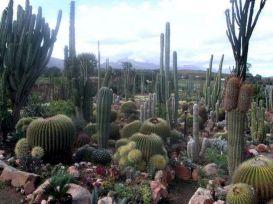 Cactus Gardens South Africa