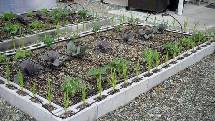 20 Beautiful Cinder Block Garden Ideas To Make Your Garden More
