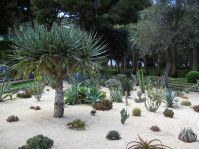 Design Cactus Garden