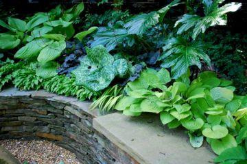 Design for Zone 7 Perennial Garden Ideas